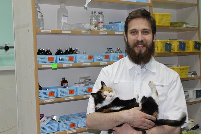 Брестский ветеринар рассказал, какие коты и собаки болеют чаще